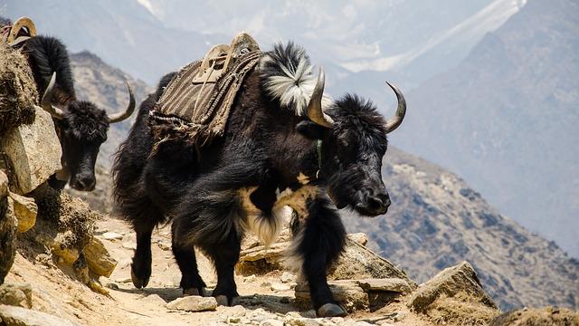 Nepali lernen